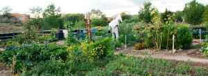 Photo of Frenchy's Field community garden
